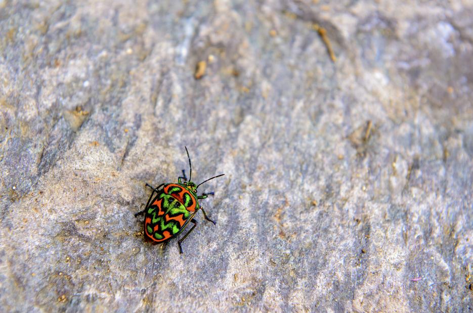 화려한 모양의 곤충