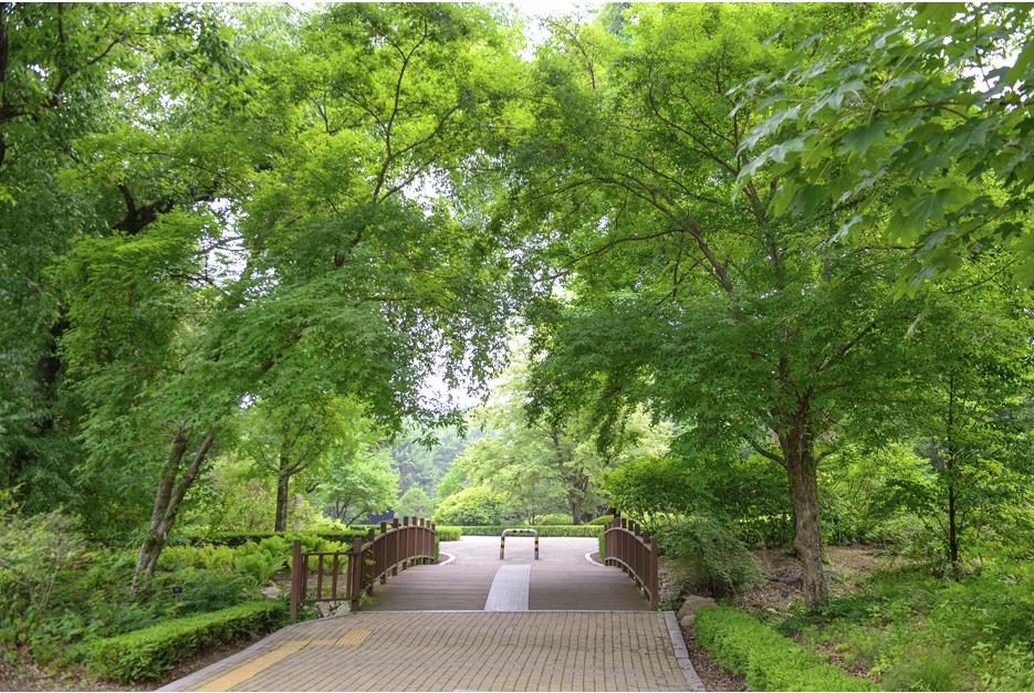 나무가 우거진 숲길