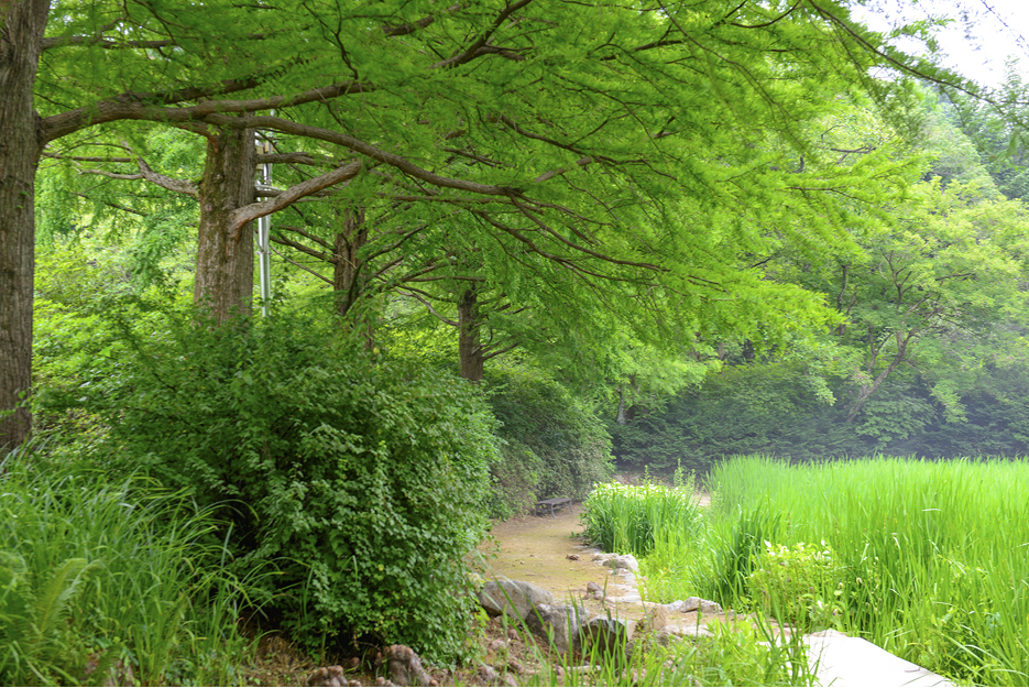 숲길과 연못