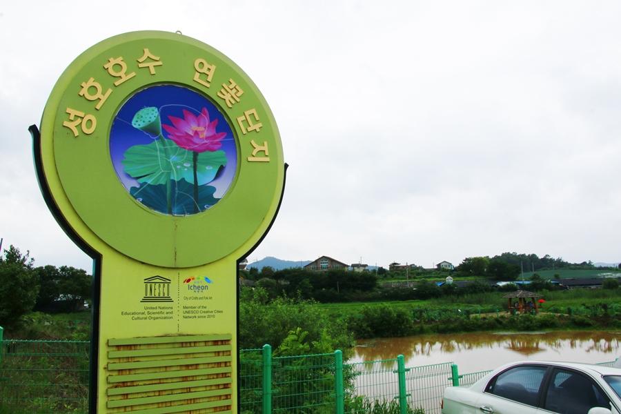 성호호수 연꽃단지