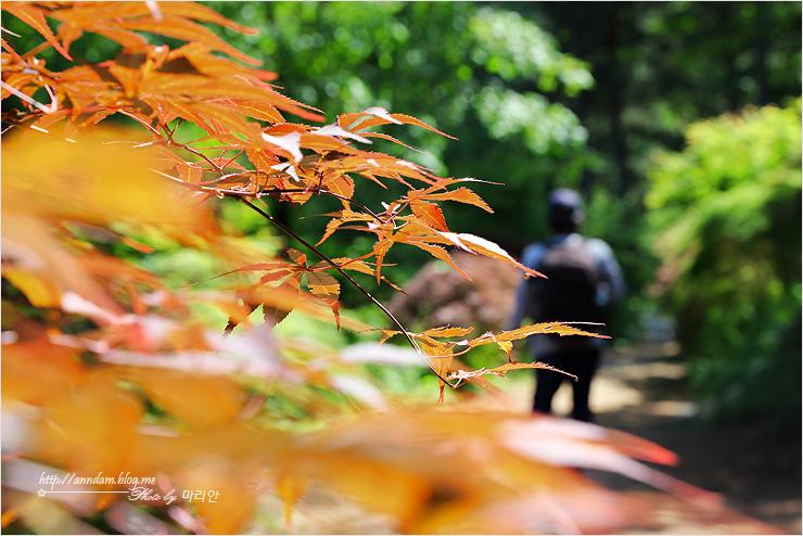 단풍나무와 사람