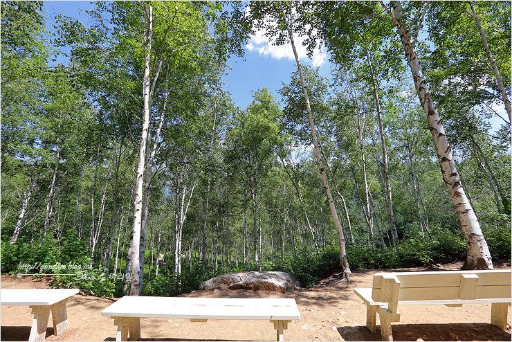 자작나무 숲 벤치쉼터