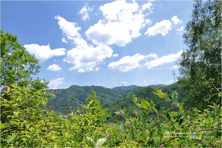 풀숲과 하늘