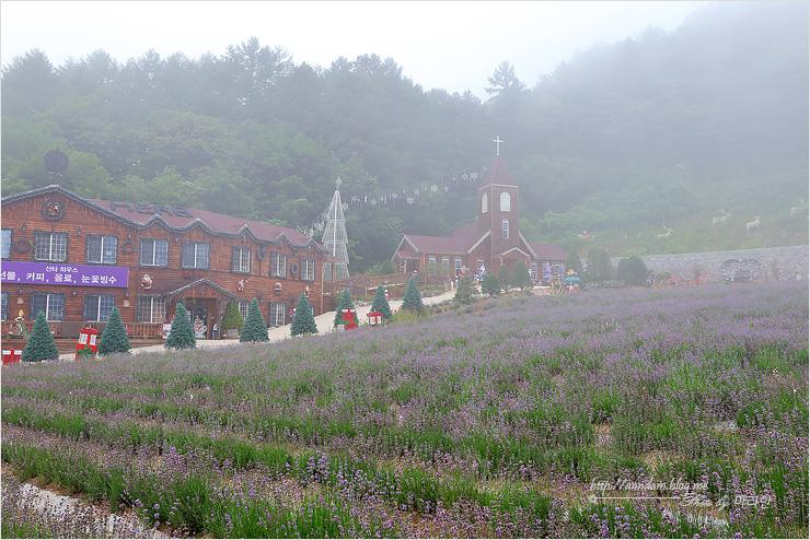 라벤더밭과 건물들