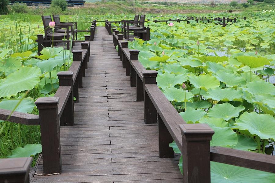 데크길과 연못