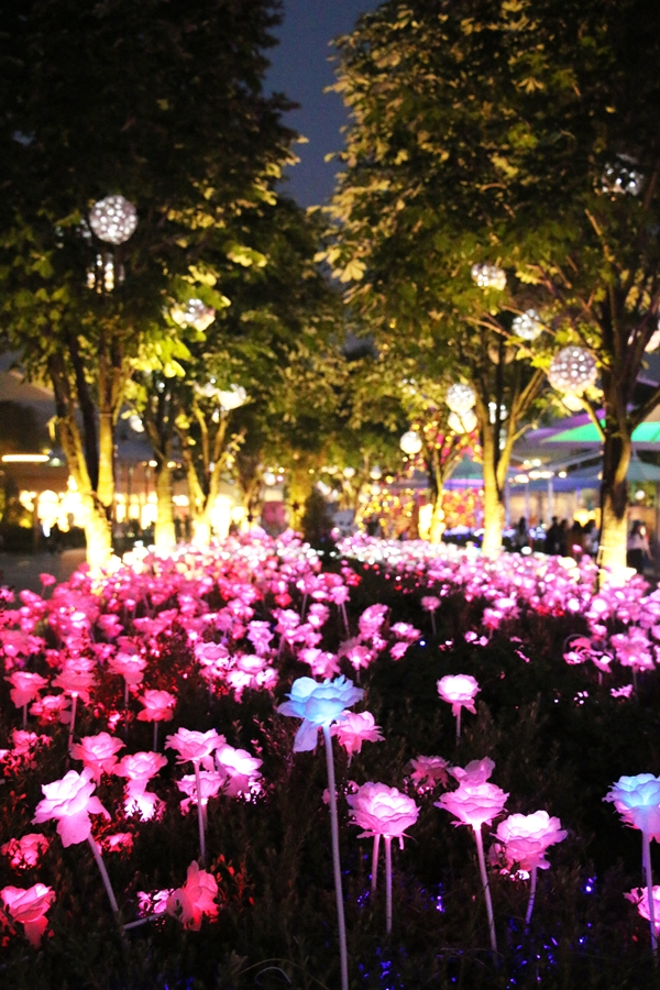 장미꽃조명