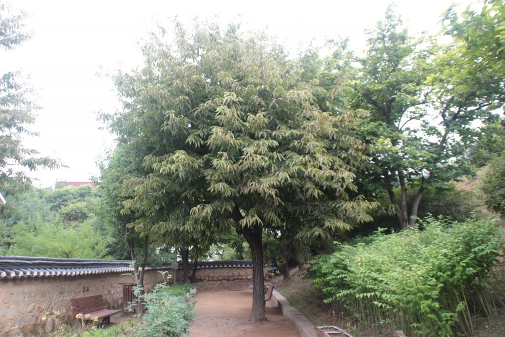밤나무가시,고양600,서오능 011