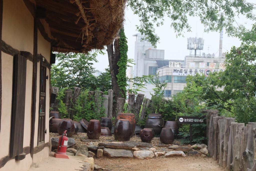 밤나무가시,고양600,서오능 060
