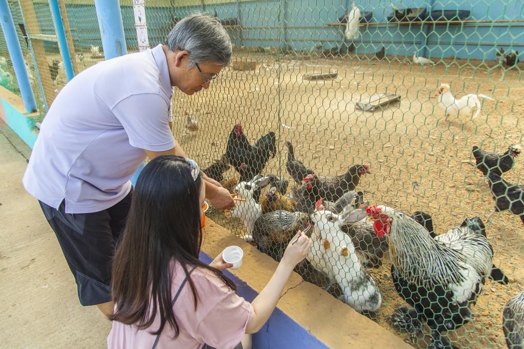 닭과 토끼에게 먹이주는 사람들