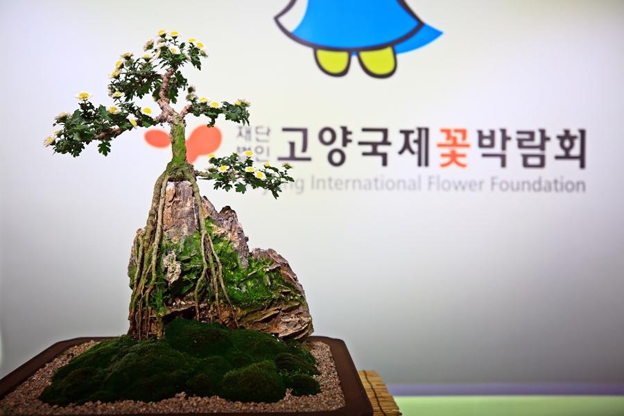 고양 가볼만한곳/고양가을꽃축제 2017 열리는 일산호수공원
