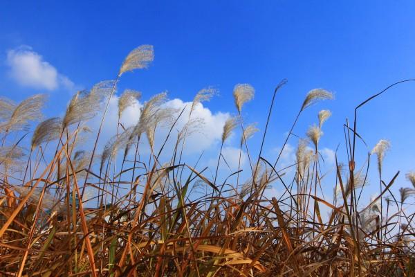 가을여행주간 가을이 소복하게 내려앉은 안산갈대습지
