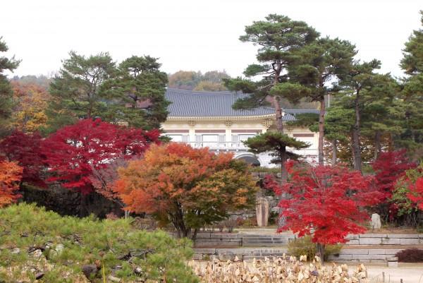 [가을여행주간] 호암미술관 희원의 화려한 단풍