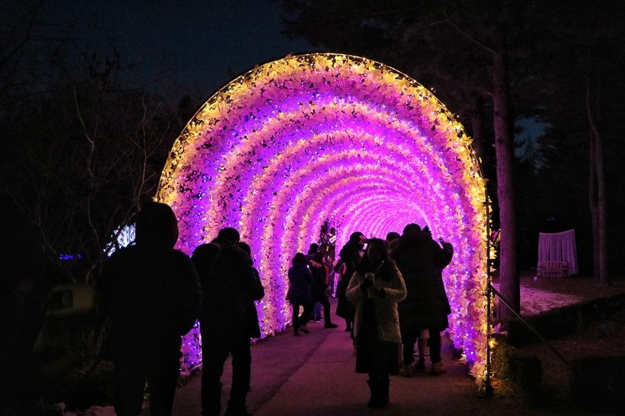아침고요수목원 빛축제 오색별빛정원전