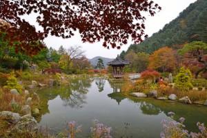 The Garden of Morning Calm3