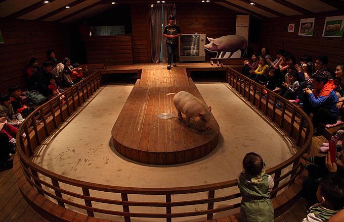 Pig Park1
