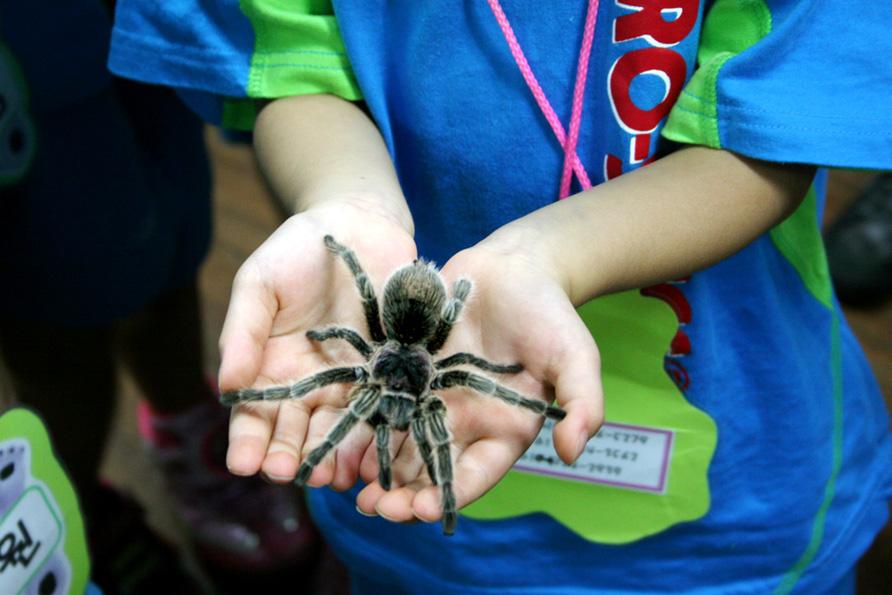 Arachnopia1