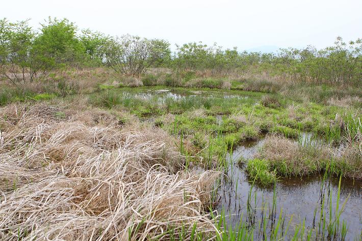 Eundaeri Water Spider Habitat of Yeoncheon