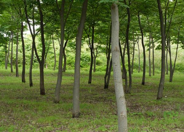 Hanam Arboretum2