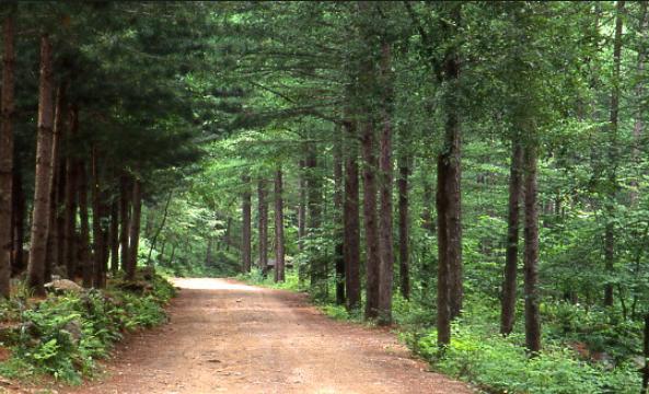 Jungmisan Natural Recreation Forest2