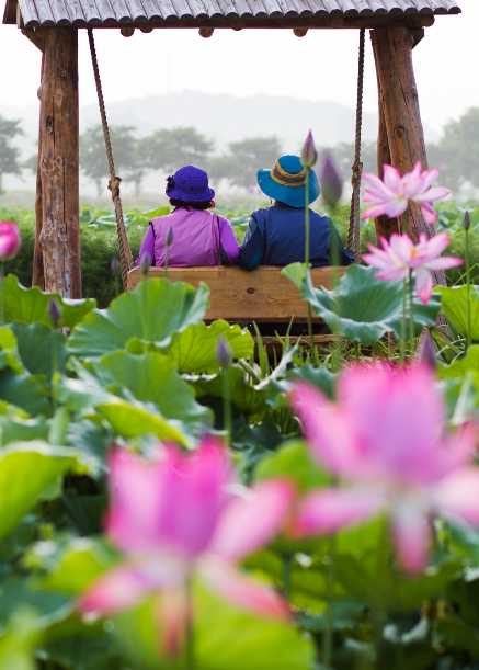 Lotus Flower Theme Park