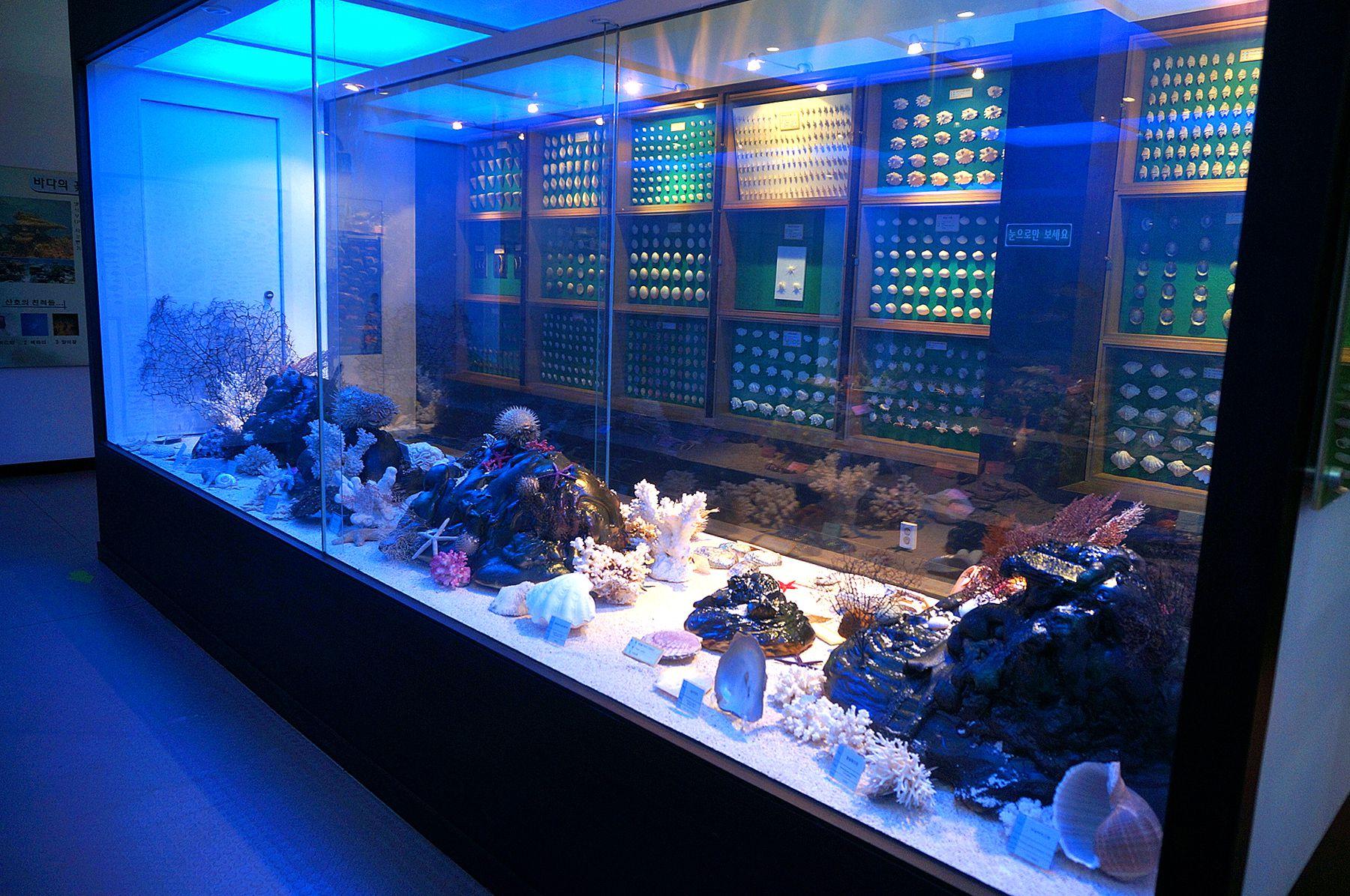 Onam Dinosaur Experience Exhibition Hall