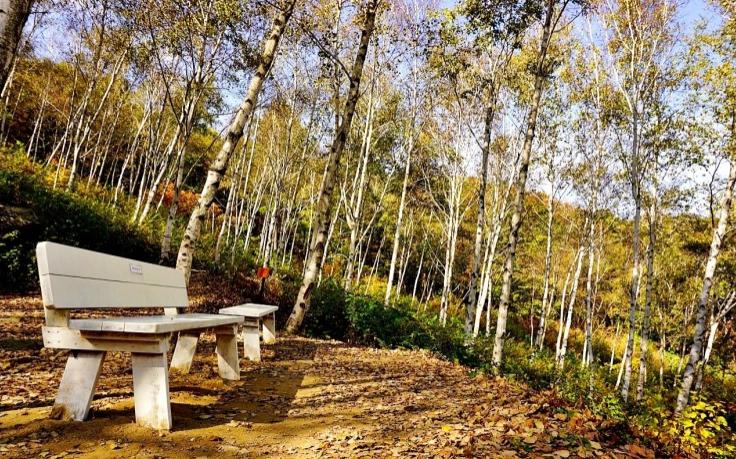 Seohuri Forest (Yangpyeong)2