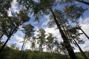 国立樹木園
