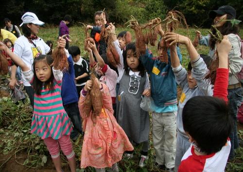 楊平収穫体験祭り