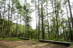 ソルメジェ自然休養林