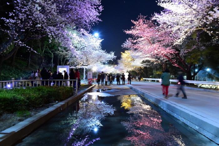 レッツランパークソウル・夜桜祭り