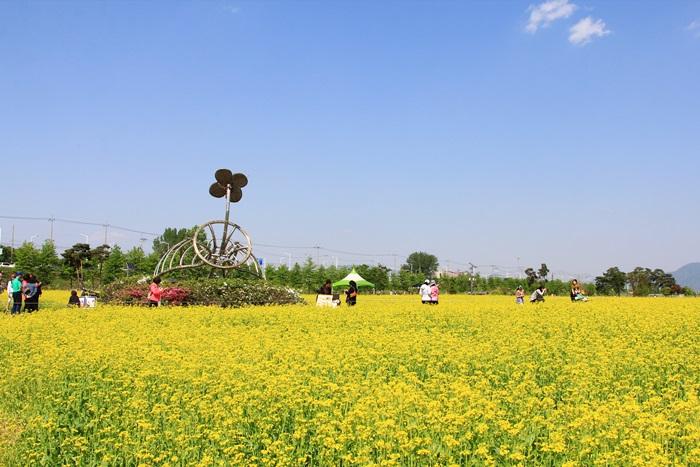 九里漢江菜の花祭り