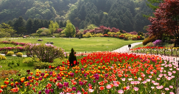 アチムゴヨ樹木園「春のお出かけ春花祭り」