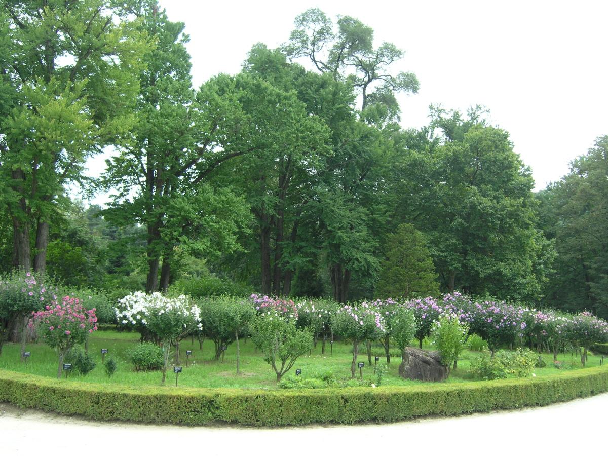 「ムクゲを見る新しい感覚、庭園樹としてのムクゲ」特別展示会