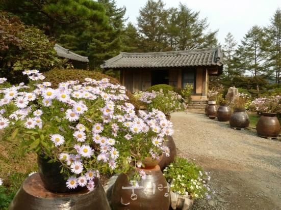 アチムゴヨ樹木園野菊展示会
