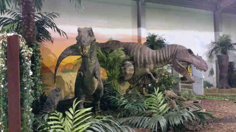 徳坪恐竜樹木園4