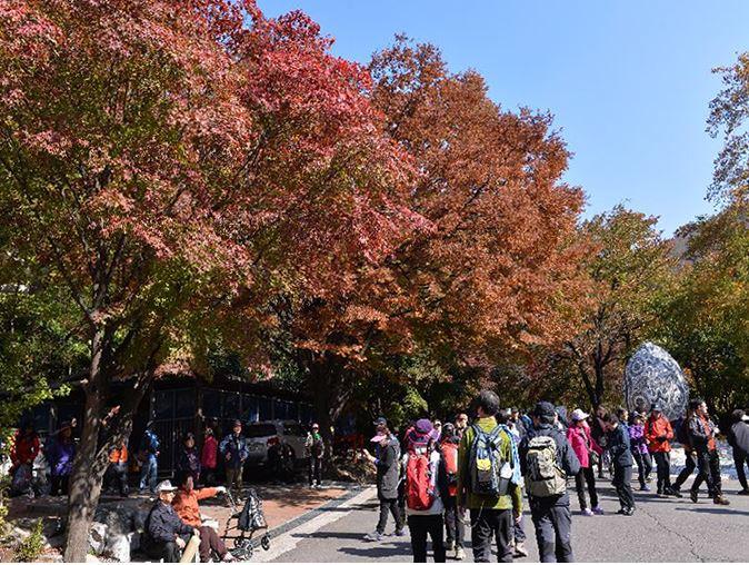 逍遥紅葉文化祭