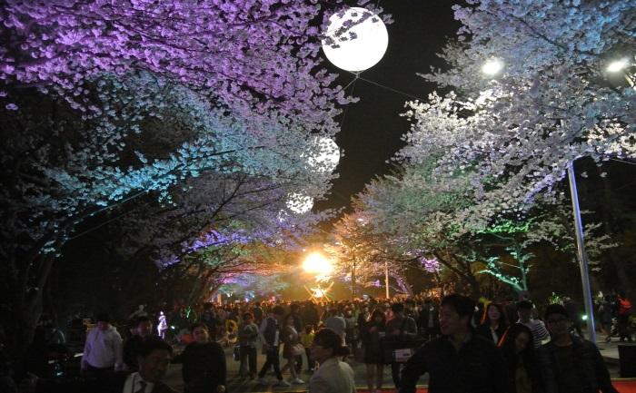 レッツランパーク・ソウルナイト桜祭り