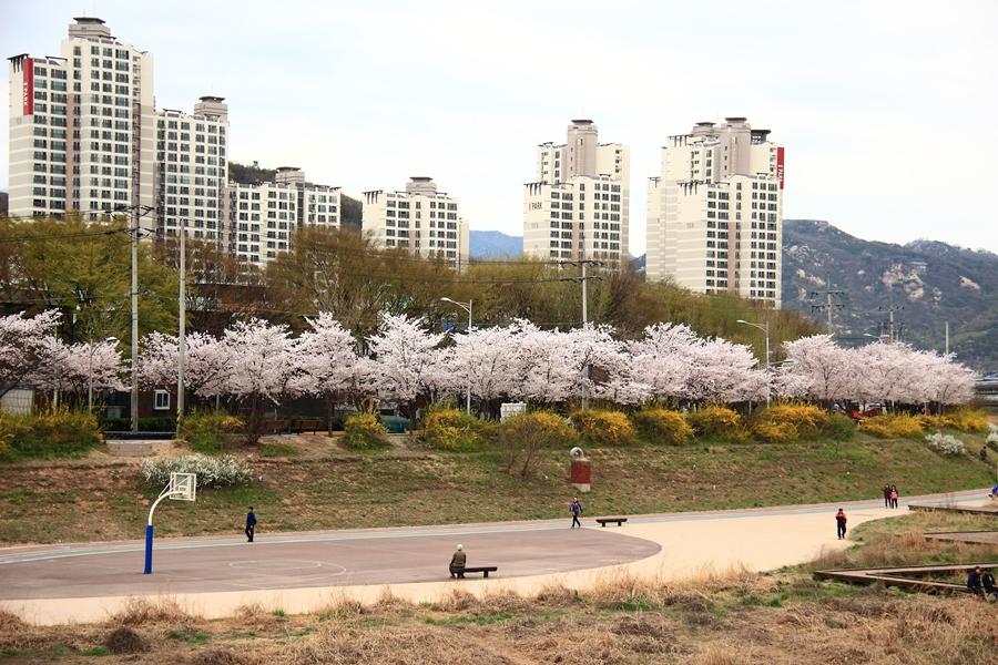 安養忠勲桜祭り