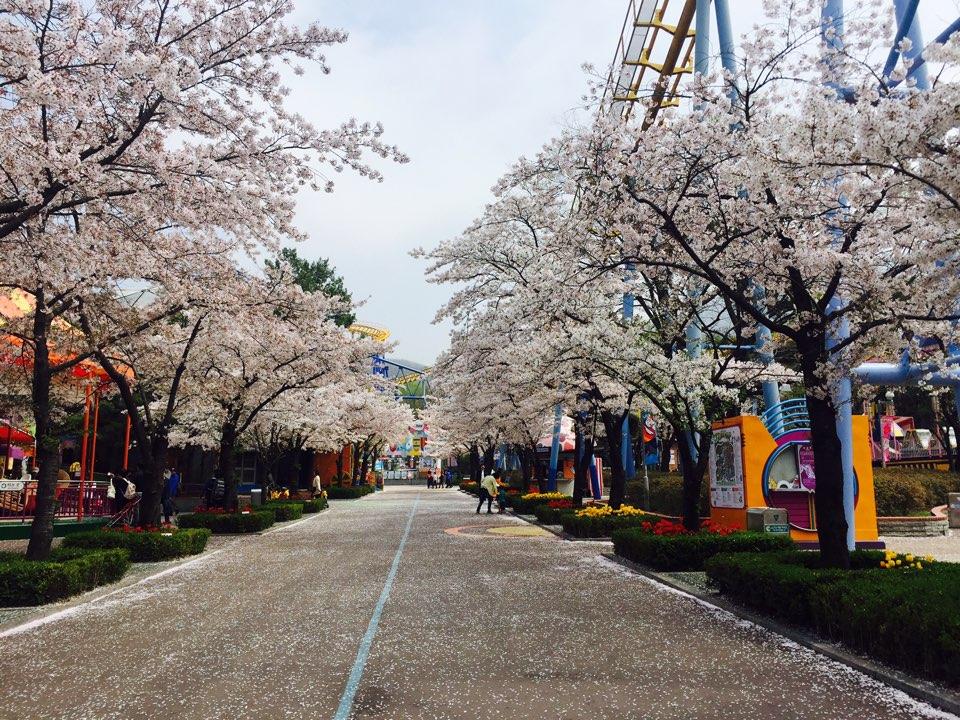 ソウルランド桜祭り