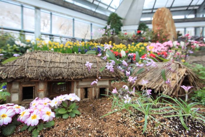 アチムゴヨ樹木園・野生花展