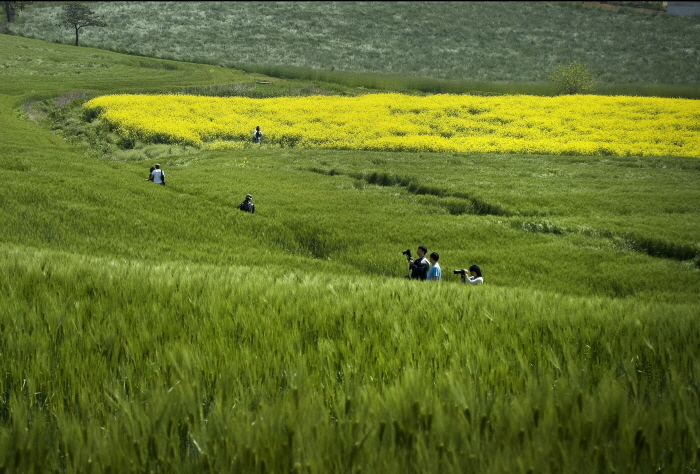 安城らい麦畑祭り