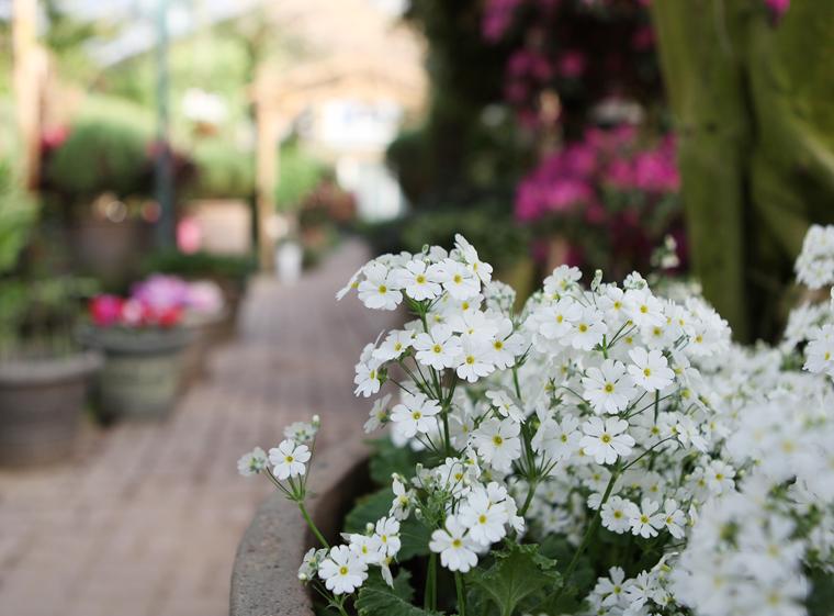ハーブアイランド・ハーブ植物園花祭り