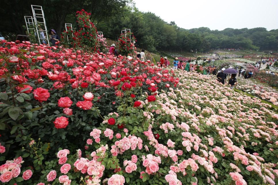 富川・百万本バラフェスティバル