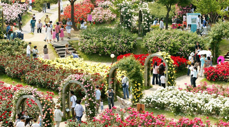ソウル大公園「バラフェスティバル」