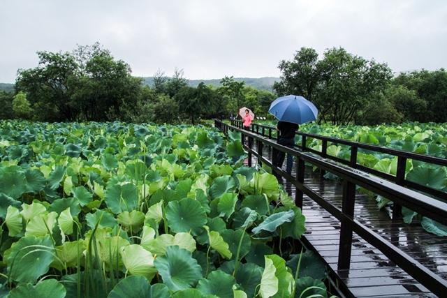 慶安川湿地エコパーク