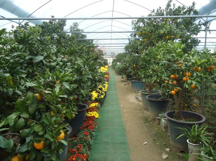 昇林植物園