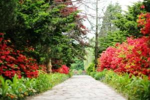 碧草池文化树木园