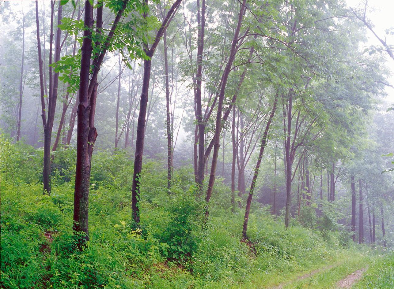 国立树木园