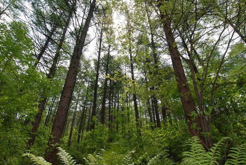 姜氏峰自然休养林
