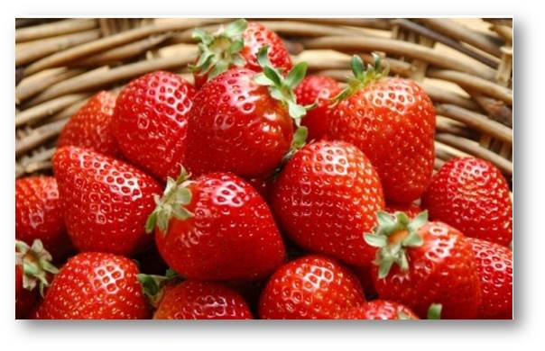 杨平草莓节